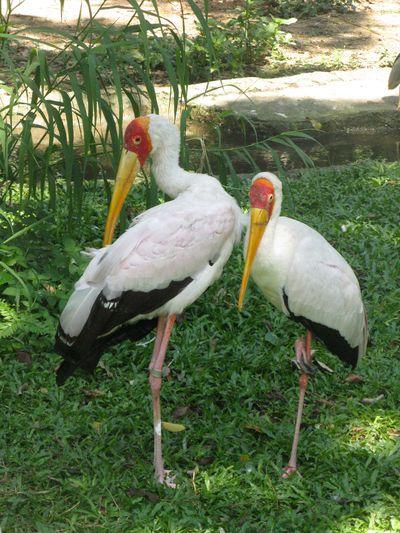 SINjurongbirdpark